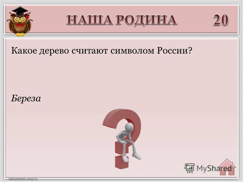 Береза Какое дерево считают символом России?