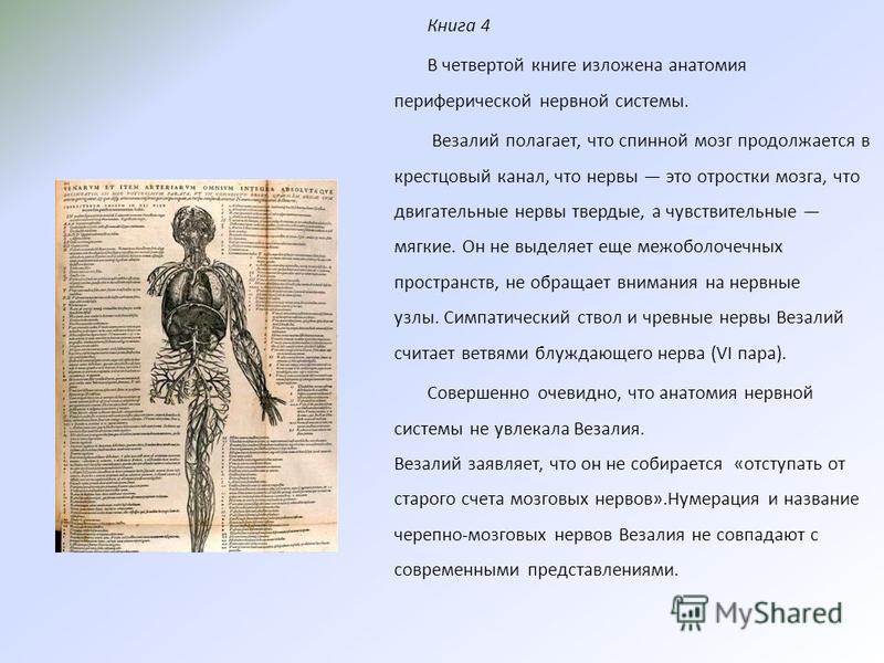 Книга 4 В четвертой книге изложена анатомия периферической нервной системы. Везалий полагает, что спинной мозг продолжается в крестцовый канал, что нервы это отростки мозга, что двигательные нервы твердые, а чувствительные мягкие. Он не выделяет еще