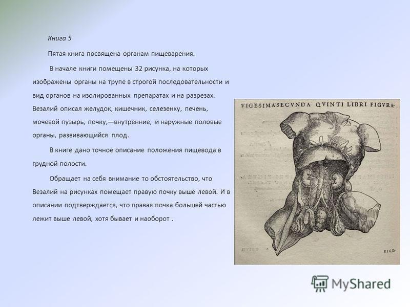 Книга 5 Пятая книга посвящена органам пищеварения. В начале книги помещены 32 рисунка, на которых изображены органы на трупе в строгой последовательности и вид органов на изолированных препаратах и на разрезах. Везалий описал желудок, кишечник, селез