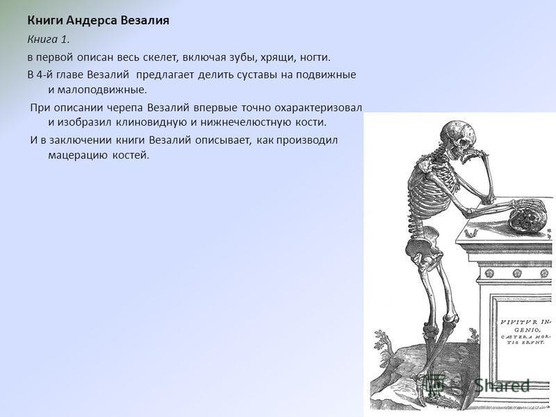 Книги Андерса Везалия Книга 1. в первой описан весь скелет, включая зубы, хрящи, ногти. В 4-й главе Везалий предлагает делить суставы на подвижные и малоподвижные. При описании черепа Везалий впервые точно охарактеризовал и изобразил клиновидную и ни