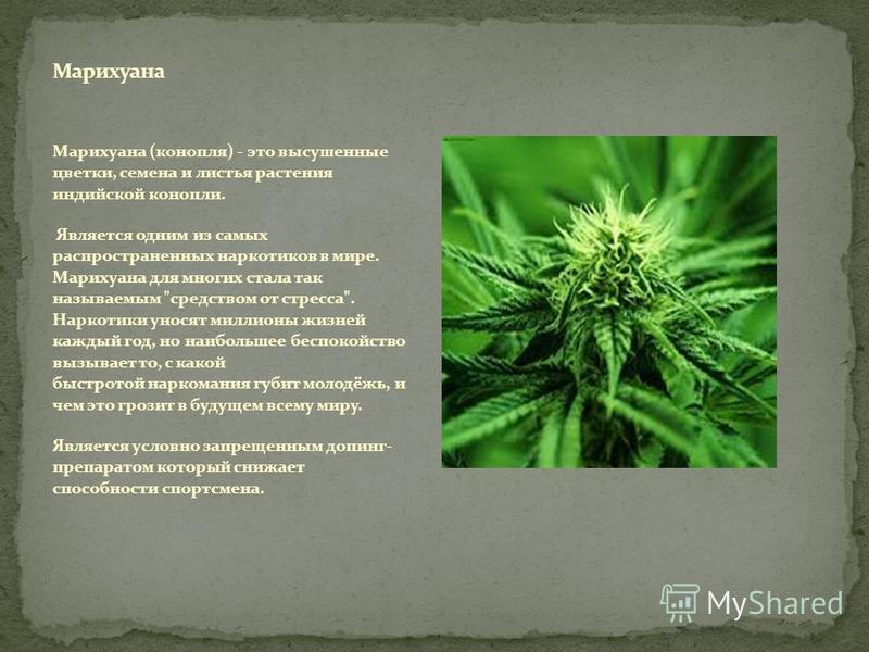 Марихуана (конопля) - это высушенные цветки, семена и листья растения индийской конопли. Является одним из самых распространенных наркотиков в мире. Марихуана для многих стала так называемым