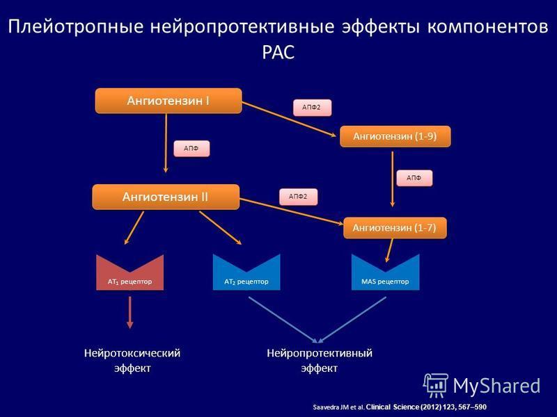 Плейотропные нейропротективные эффекты компонентов РАС АПФ Ангиотензин IАнгиотензин II AT 2 рецептор AT 1 рецептор Saavedra JM et al. Clinical Science (2012) 123, 567–590 АПФ2 Ангиотензин (1-9)Ангиотензин (1-7) MAS рецептор АПФ2АПФ Нейротоксический э