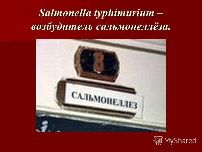 Salmonella typhimurium – возбудитель сальмонеллёза.