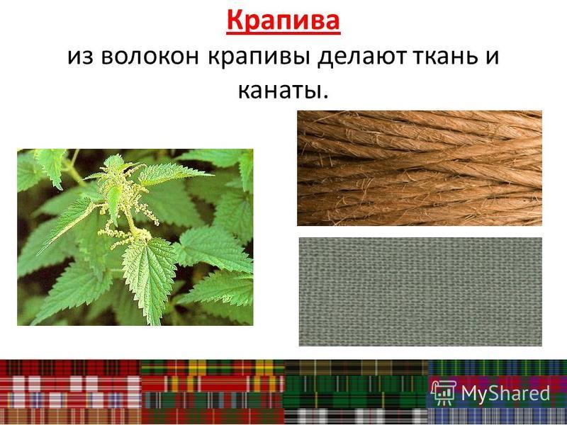 Крапива из волокон крапивы делают ткань и канаты.