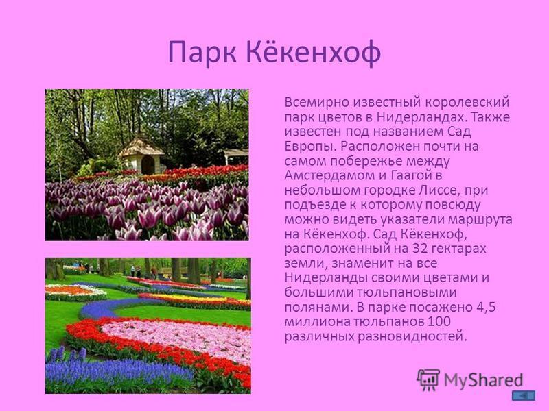 Парк Кёкенхоф Всемирно известный королевский парк цветов в Нидерландах. Также известен под названием Сад Европы. Расположен почти на самом побережье между Амстердамом и Гаагой в небольшом городке Лиссе, при подъезде к которому повсюду можно видеть ук