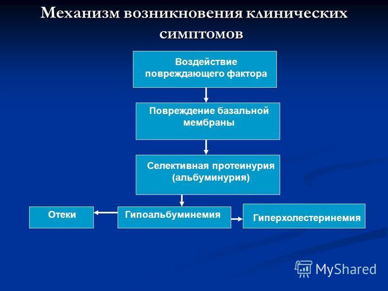 Механизм возникновения клиничешских симптомов Воздействие повреждающего фактора Повреждение базальной мембраны Селективная протеинурия (альбуминурия) Гипоальбуминемия Гиперхолестеринемия Отеки