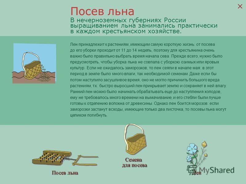 Посев льна Семена для посева Лен В нечерноземных губерниях России выращиванием льна занимались практически в каждом крестьянском хозяйстве. Лен принадлежит к растениям, имеющим самую короткую жизнь: от посева до его уборки проходит от 11 до 14 недель