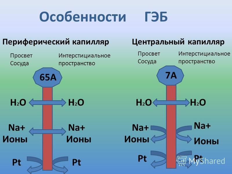 65А 7А H2OH2OH2OH2OH2OH2OH2OH2O Na+ Ионы Pt Центральный капилляр Pt Периферический капилляр Особенности ГЭБ Просвет Сосуда Интерстициальное пространство Просвет Сосуда