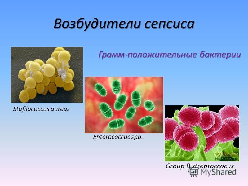 Возбудители сепсиса Грамм-положительные бактерии Stafilococcus aureus Enterococcuc spp. Group B streptoccocus