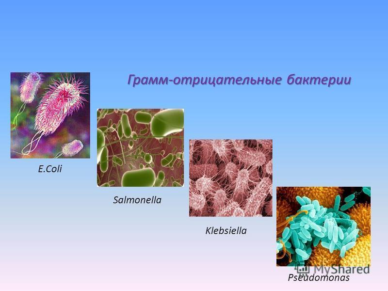 Грамм-отрицательные бактерии E.Coli Salmonella Klebsiella Pseudomonas