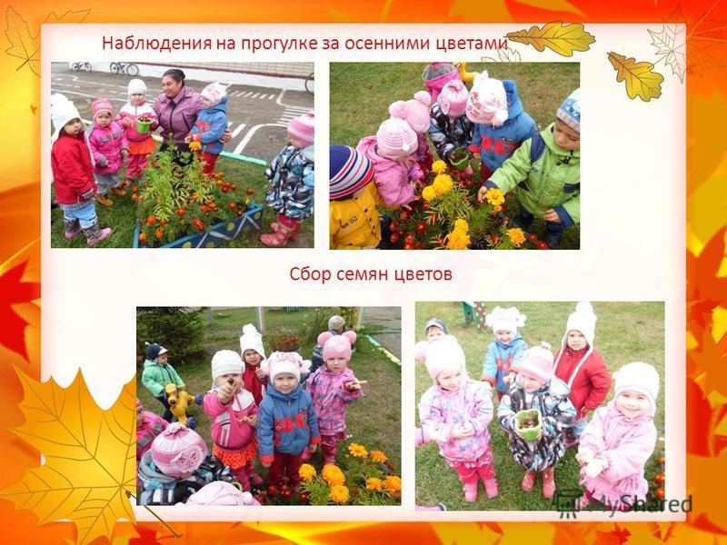 Наблюдения на прогулке за осенними цветами Сбор семян цветов