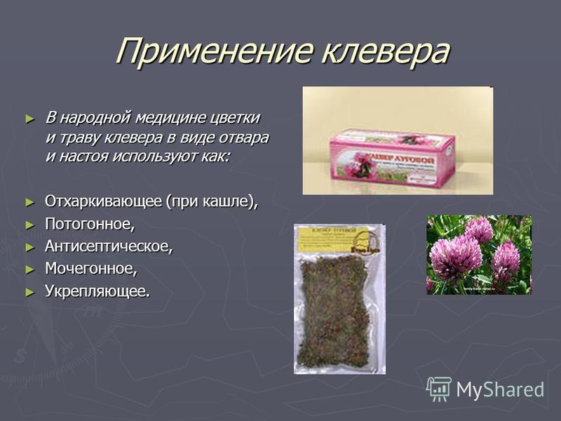Применение клевера В народной медицине цветки и траву клевера в виде отвара и настоя используют как: В народной медицине цветки и траву клевера в виде отвара и настоя используют как: Отхаркивающее (при кашле), Отхаркивающее (при кашле), Потогонное, П