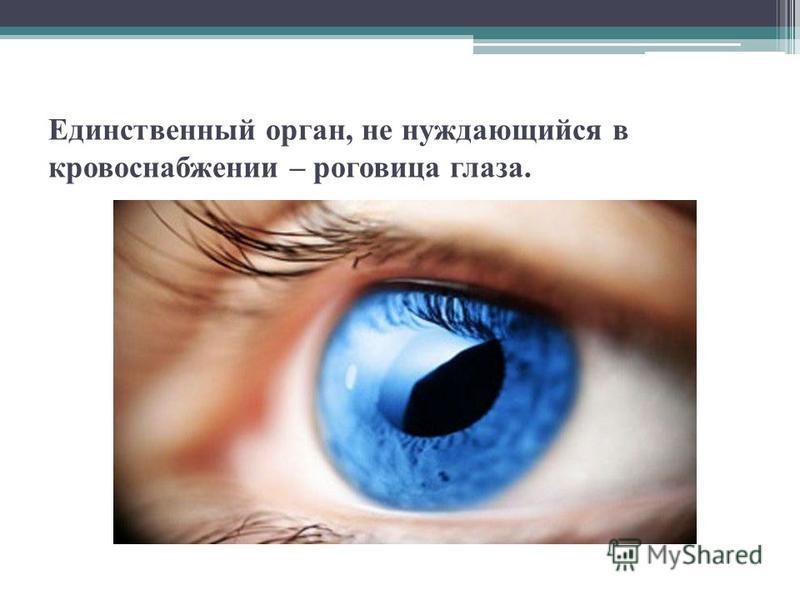 Единственный орган, не нуждающийся в кровоснабжении – роговица глаза.