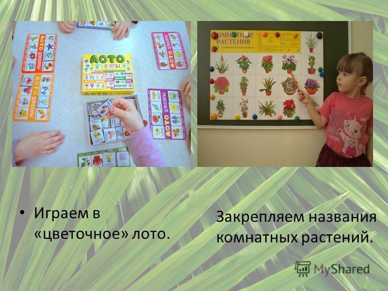 Играем в «цветочное» лото. Закрепляем названия комнатных растений.