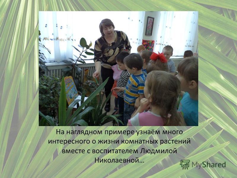 На наглядном примере узнаём много интересного о жизни комнатных растений вместе с воспитателем Людмилой Николаевной…