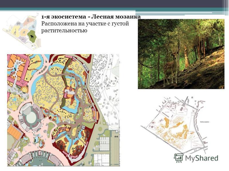 1-я экосистема - Лесная мозаика Расположена на участке с густой растительностью