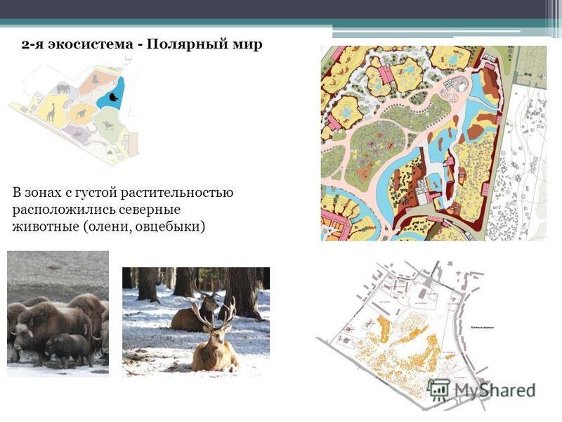 2-я экосистема - Полярный мир В зонах с густой растительностью расположились северные животные (олени, овцебыки)
