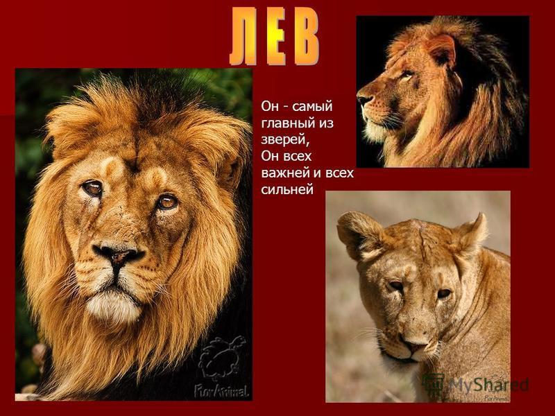 Он - самый главный из зверей, Он всех важней и всех сильней
