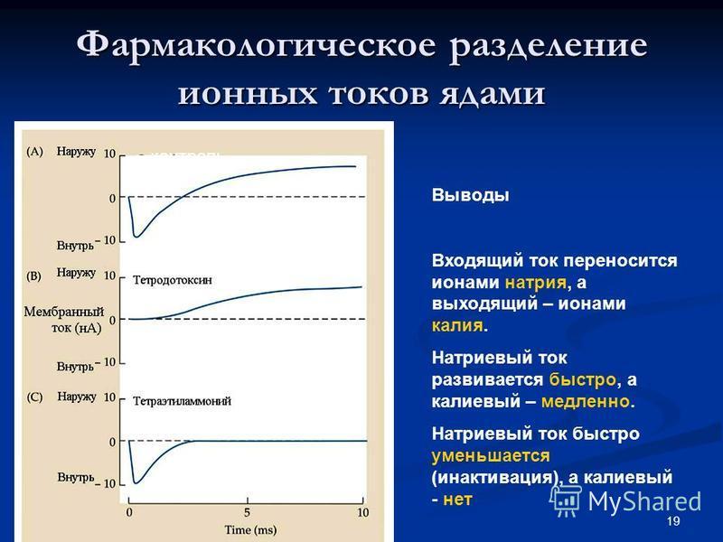 19 Фармакологическое разделение ионных токов ядами контроль Калиевый ток Натриевый ток Выводы Входящий ток переносится ионами натрия, а выходящий – ионами калия. Натриевый ток развивается быстро, а калиевый – медленно. Натриевый ток быстро уменьшаетс