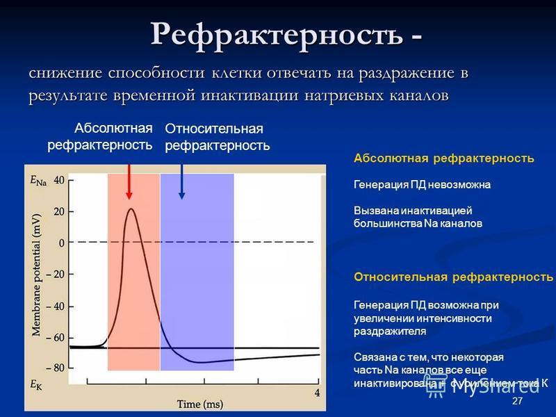 27 Рефрактерность - Рефрактерность - снижение способности клетки отвечать на раздражение в результате временной инактивации натриевых каналов Абсолютная рефрактерность Относительная рефрактерность Абсолютная рефрактерность Генерация ПД невозможна Выз