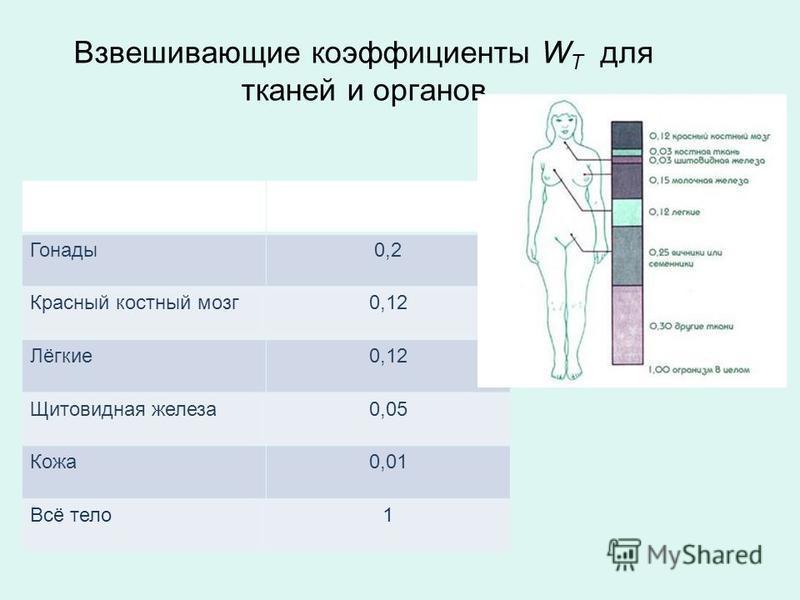 Взвешивающие коэффициенты W T для тканей и органов Ткани и органыWTWT Гонады 0,2 Красный костный мозг 0,12 Лёгкие 0,12 Щитовидная железа 0,05 Кожа 0,01 Всё тело 1