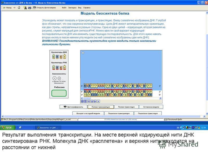 Результат выполнения транскрипции. На месте верхней кодирующей нити ДНК синтезирована РНК. Молекула ДНК «расплетена» и верхняя нить находится на расстоянии от нижней