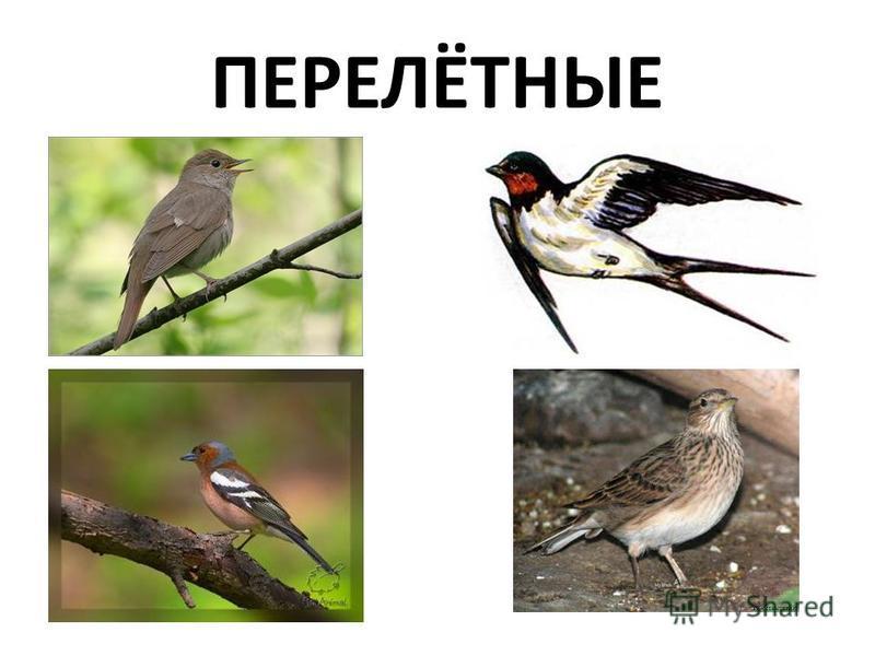 ПЕРЕЛЁТНЫЕ