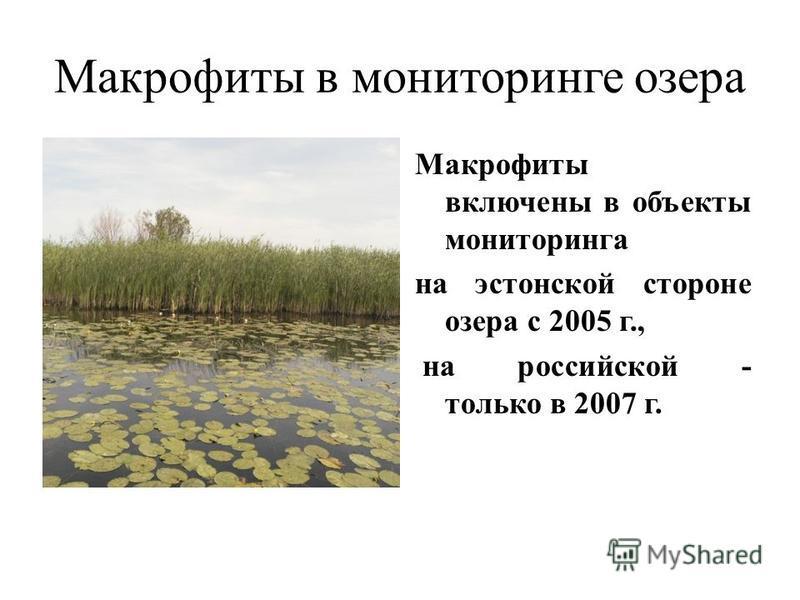 Макрофиты в мониторинге озера. Макрофиты включены в объекты мониторинга на эстонской стороне озера с 2005 г., на российской - только в 2007 г.