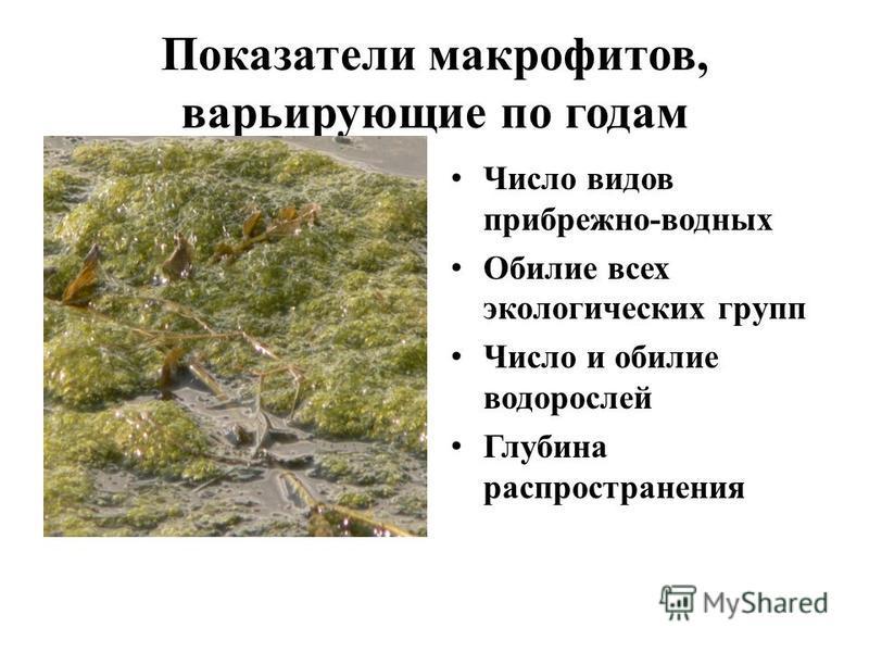 Показатели макрофитов, варьирующие по годам Число видов прибрежно-водных Обилие всех экологических групп Число и обилие водорослей Глубина распространения