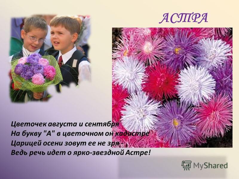 АСТРА Цветочек августа и сентября На букву А в цветочном он кадастре Царицей осени зовут ее не зря - Ведь речь идет о ярко-звездной Астре!