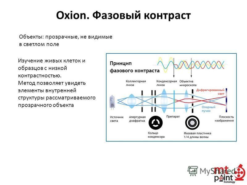 Oxion. Фазовый контраст Объекты: прозрачные, не видимые в светлом поле Изучение живых клеток и образцов с низкой контрастностью. Метод позволяет увидеть элементы внутренней структуры рассматриваемого прозрачного объекта