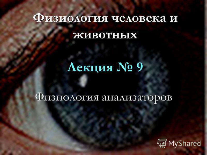 Физиология человека и животных Лекция 9 Физиология анализаторов
