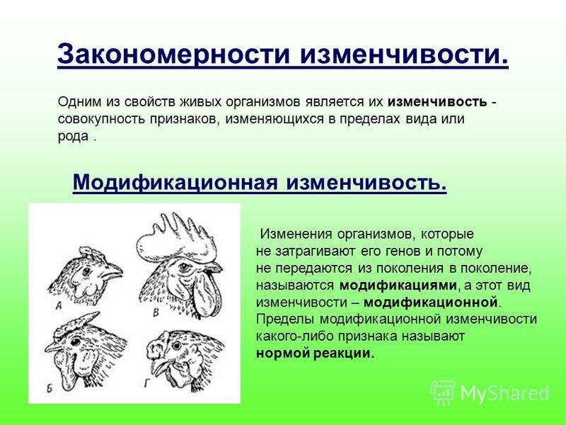 Закономерности изменчивости. Одним из свойств живых организмов является их изменчивость - совокупность признаков, изменяющихся в пределах вида или рода. Модификационная изменчивость. Изменения организмов, которые не затрагивают его генов и потому не