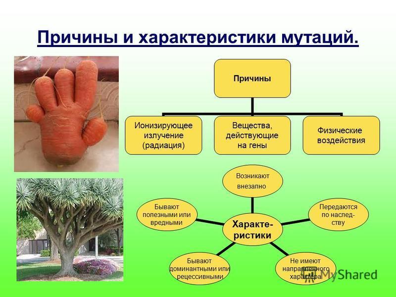 Причины и характеристики мутаций. Причины Ионизирующее излучение (радиация) Вещества, действующие на гены Физические воздействия Характе- ристики Возникают внезапно Передаются по наследству Не имеют направленного характера Бывают доминантными или рец