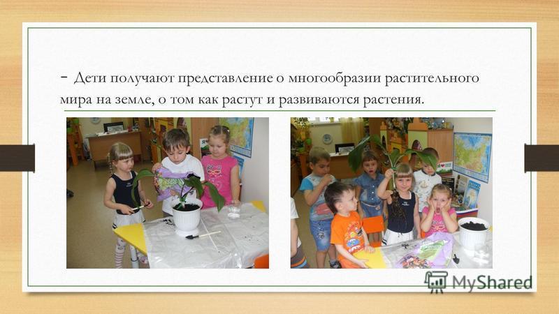 - Дети получают представление о многообразии растительного мира на земле, о том как растут и развиваются растения.