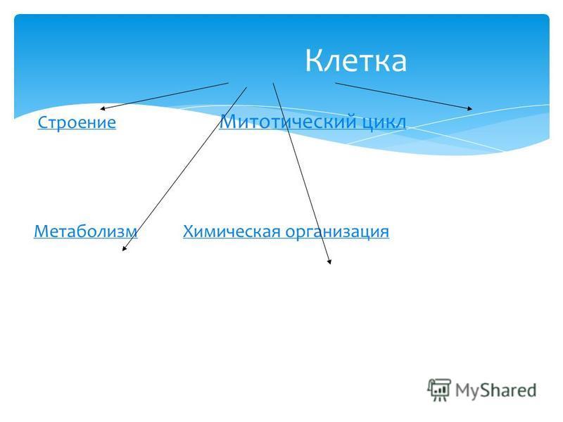 Строение Митотический цикл Строение Митотический цикл Метаболизм Химическая организация МетаболизмХимическая организация Клетка