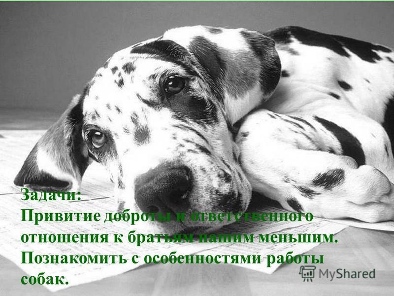 Задачи: Привитие доброты и ответственного отношения к братьям нашим меньшим. Познакомить с особенностями работы собак.