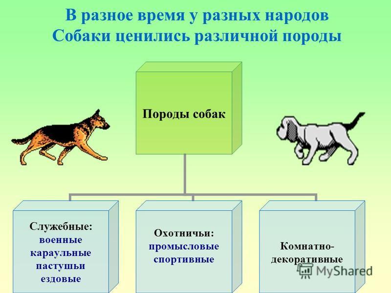 В разное время у разных народов Собаки ценились различной породы Породы собак Служебные: военные караульные пастушьи ездовые Охотничьи: промысловые спортивные Комнатно- декоративные