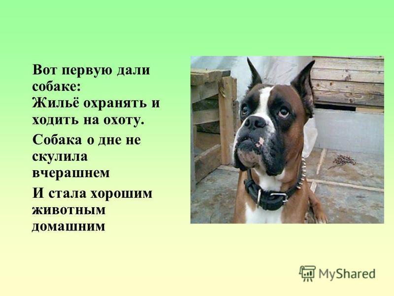 Вот первую дали собаке: Жильё охранять и ходить на охоту. Собака о дне не скулила вчерашнем И стала хорошим животным домашним