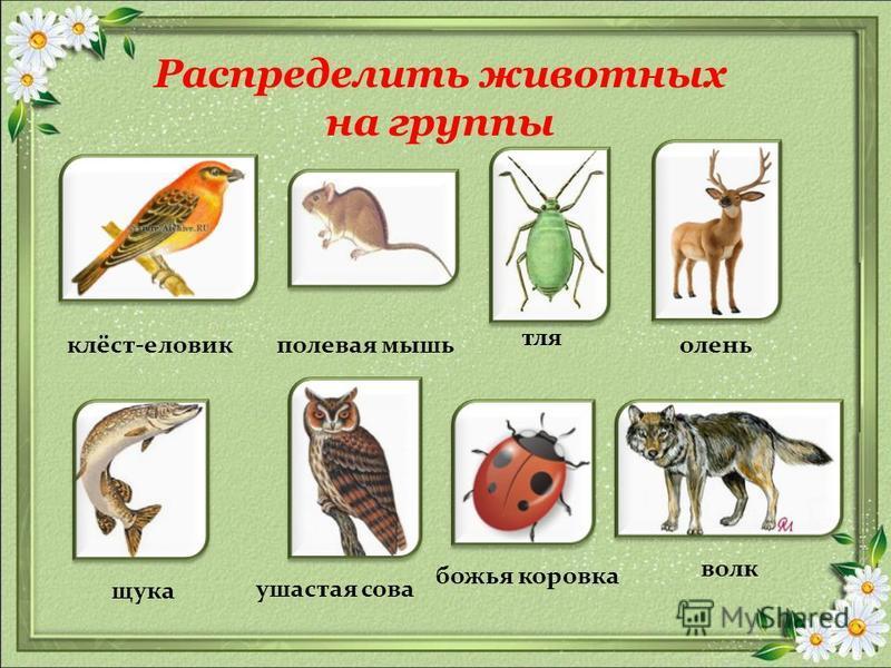 Распределить животных на группы полевая мышь волк тля клёст-еловик божья коровка ушастая сова щука олень