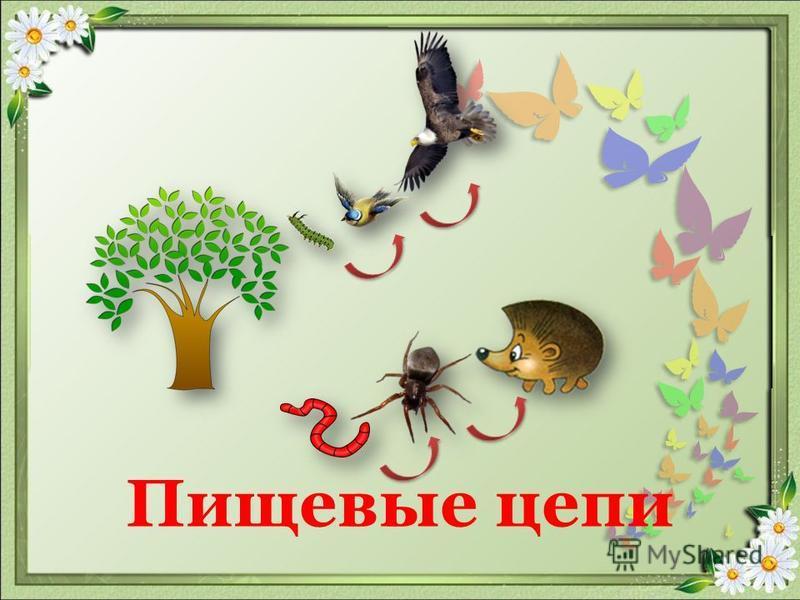 Распределить животных на группы клёст-еловик щука олень волк полевая мышь ушастая сова тля божья коровка