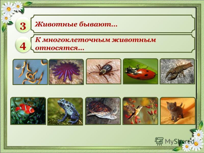 Царства живой природы Жизненные формы растений 11 22
