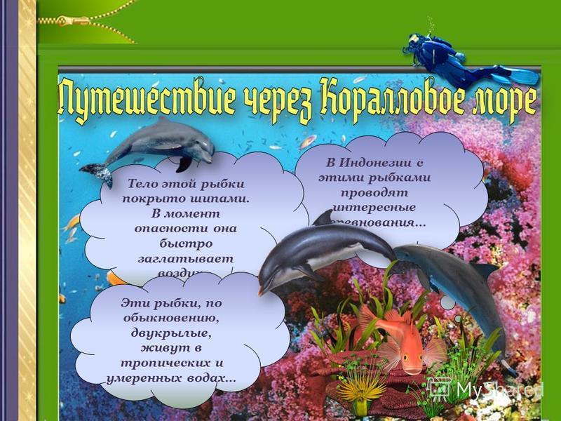 В Индонезии с этими рыбками проводят интересные соревнования… Тело этой рыбки покрыто шипами. В момент опасности она быстро заглатывает воздух… Эти рыбки, по обыкновению, двукрылые, живут в тропических и умеренных водах…