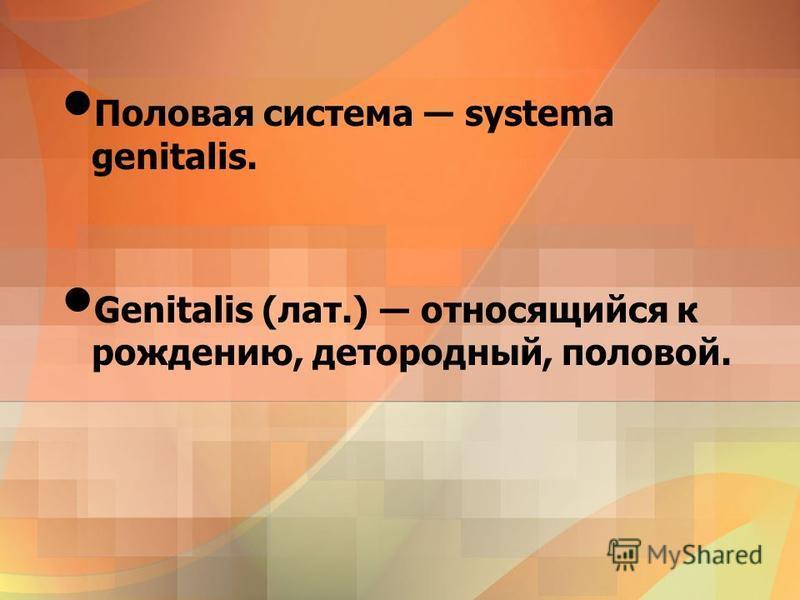 Половая система systema genitalis. Genitalis (лат.) относящийся к рождению, детородный, половой.