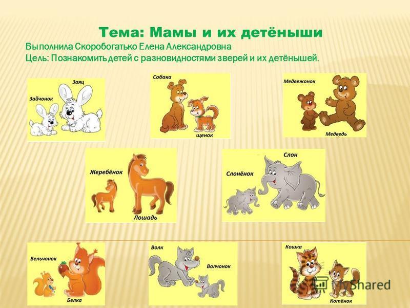 Тема: Мамы и их детёныши Выполнила Скоробогатько Елена Александровна Цель: Познакомить детей с разновидностями зверей и их детёнышей.