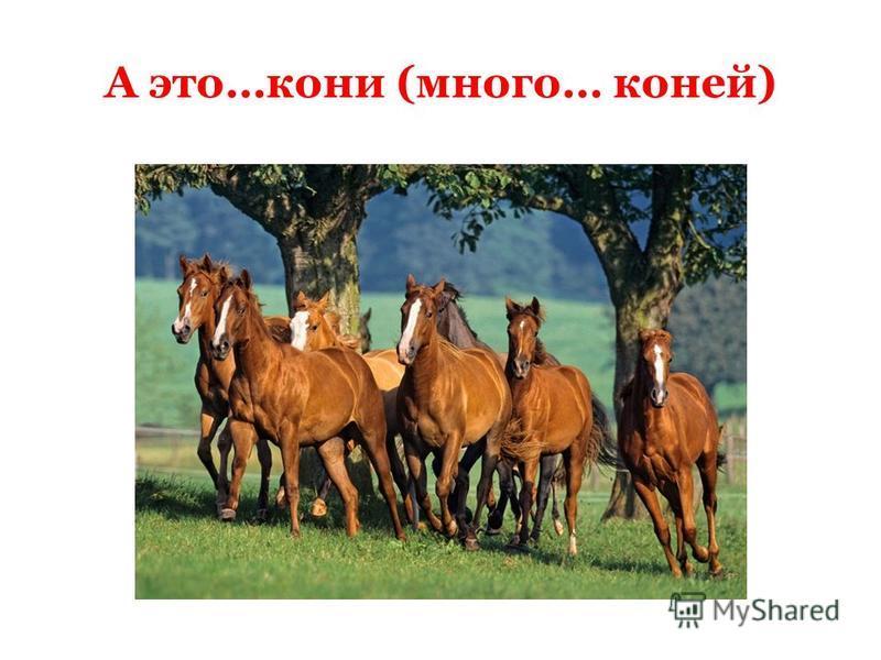 А это…кони (много… коней)