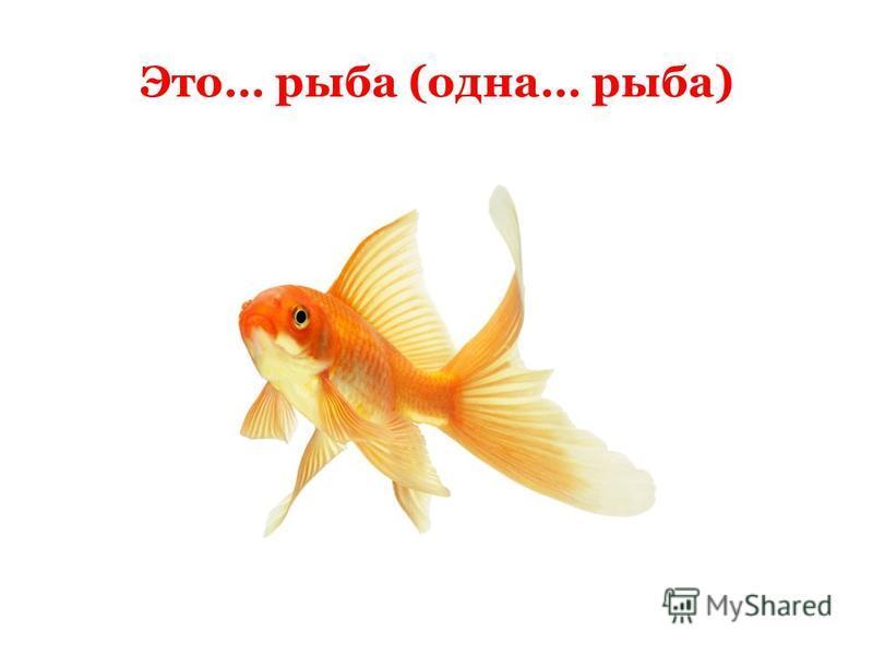 Это… рыба (одна… рыба)