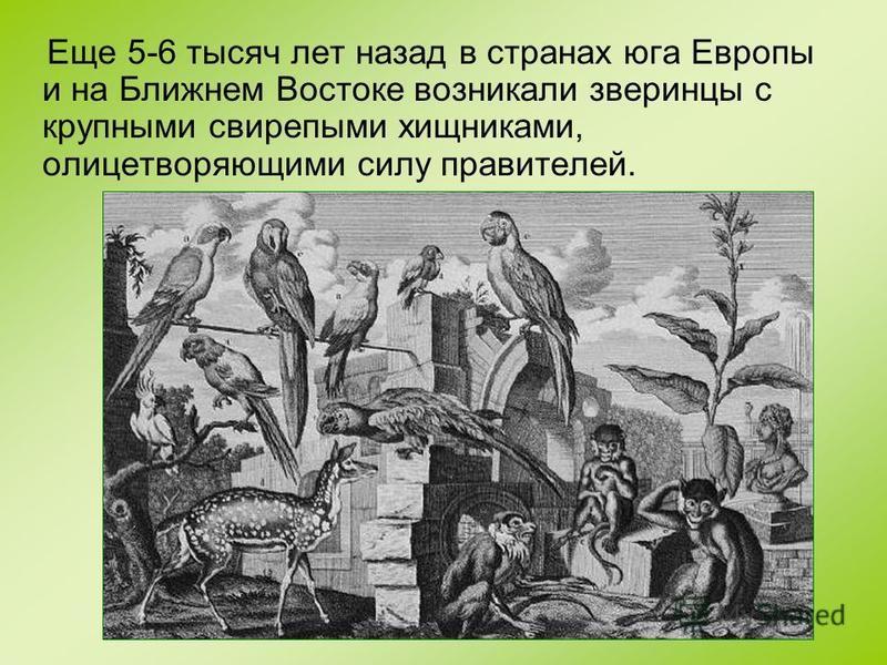 Еще 5-6 тысяч лет назад в странах юга Европы и на Ближнем Востоке возникали зверинцы с крупными свирепыми хищниками, олицетворяющими силу правителей.