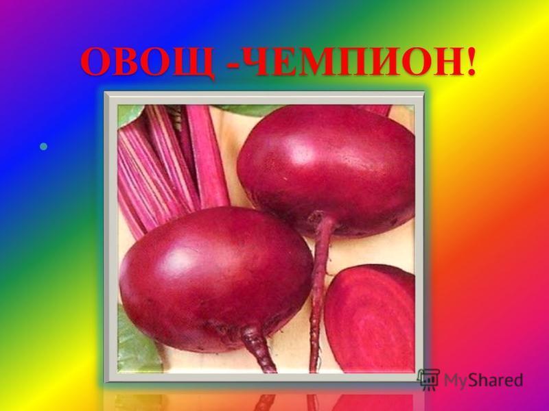 ОВОЩ -ЧЕМПИОН!