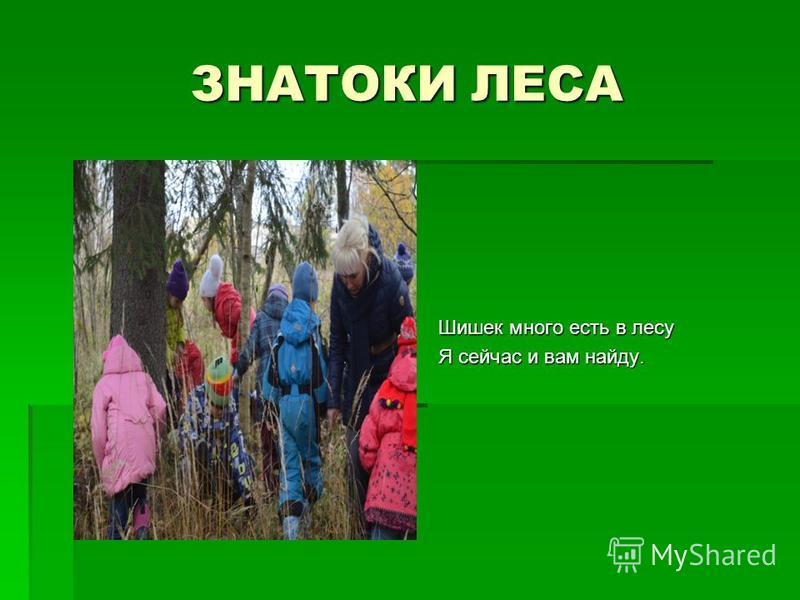 ЗНАТОКИ ЛЕСА Шишек много есть в лесу Я сейчас и вам найду.